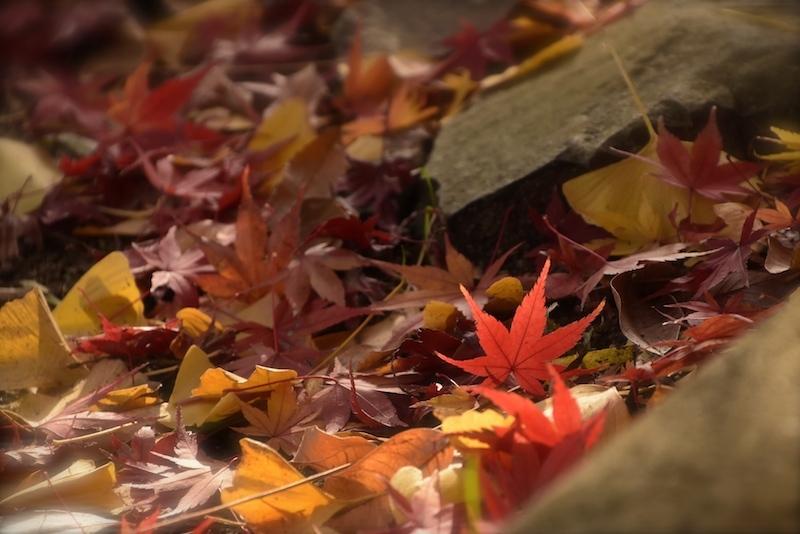 枯れ葉エピローグ