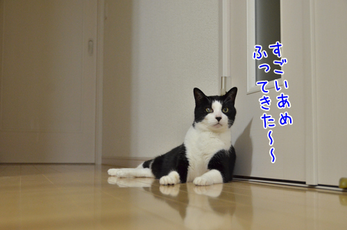DSC_6233_2.jpg