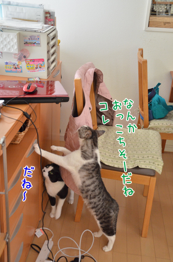 DSC_7228_2.jpg