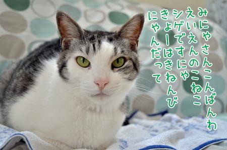DSC_7610_2.jpg