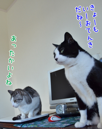 DSC_7625_2.jpg