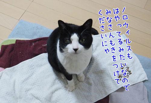 PC140002_2.jpg