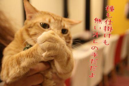 ちゃんぷ20170109-01