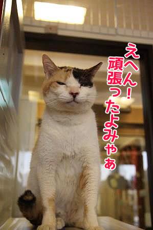 ミケヲ20170119