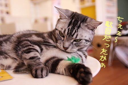 凛太朗20170204-07