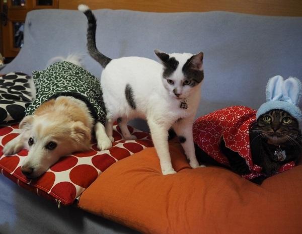 h27,1お正月犬と猫