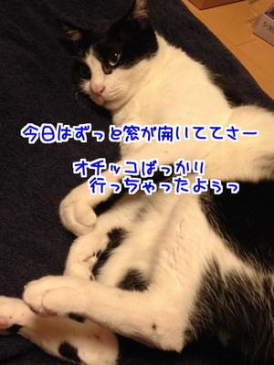 PRQANcDrc5tdJwm1482667667_1482667934.jpg