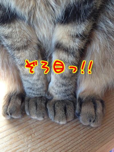 pc_hGeKOiYPC4851485412244_1485412349.jpg