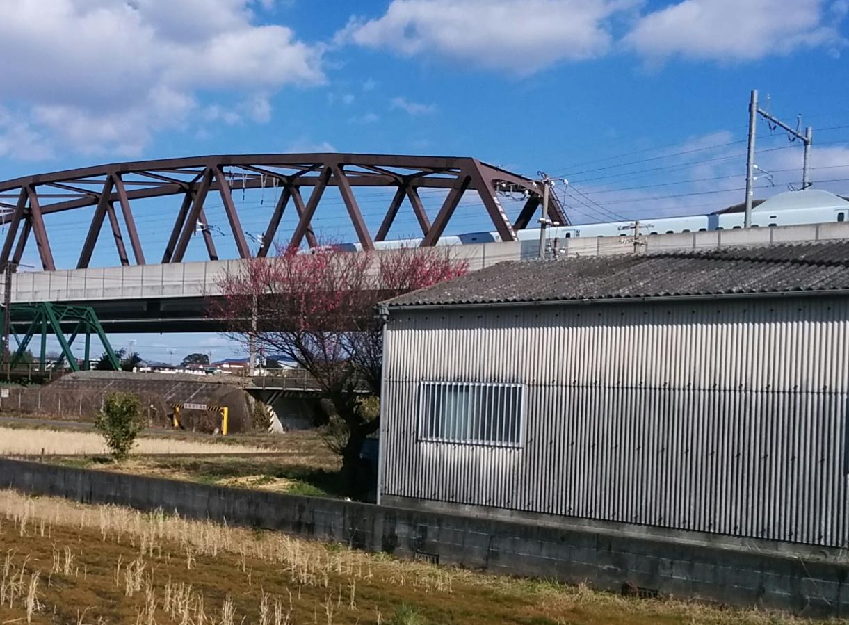 新幹線と紅梅