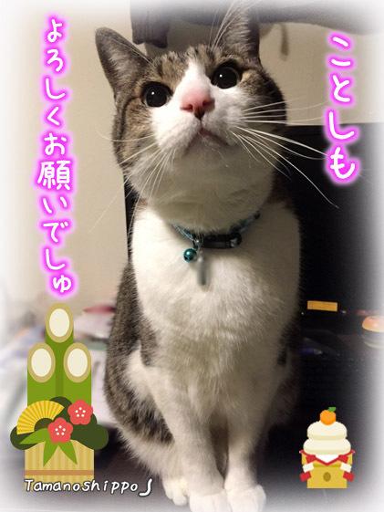 おすまし猫(ちび)新年のご挨拶2017
