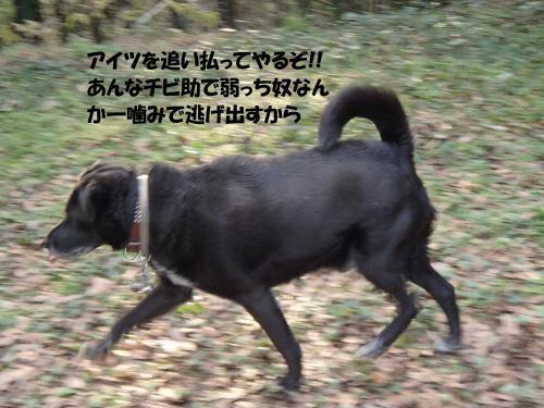 P1041620_convert_20170106135555.jpg