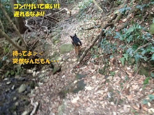 P1120046_convert_20170113084547.jpg
