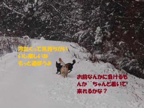 P1230141_convert_20170124095849.jpg