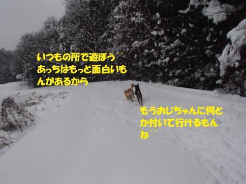 P1230148_convert_20170124100013.jpg
