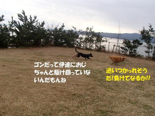 P1310269_convert_20170201132821.jpg