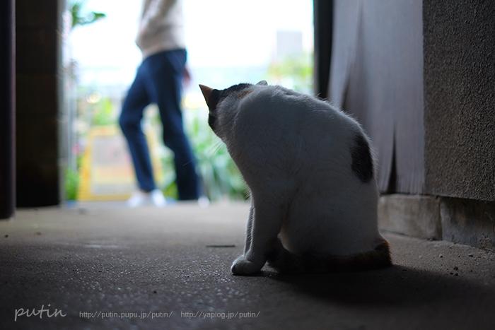 putin_owner_nekoyuhi161150635493011.jpg