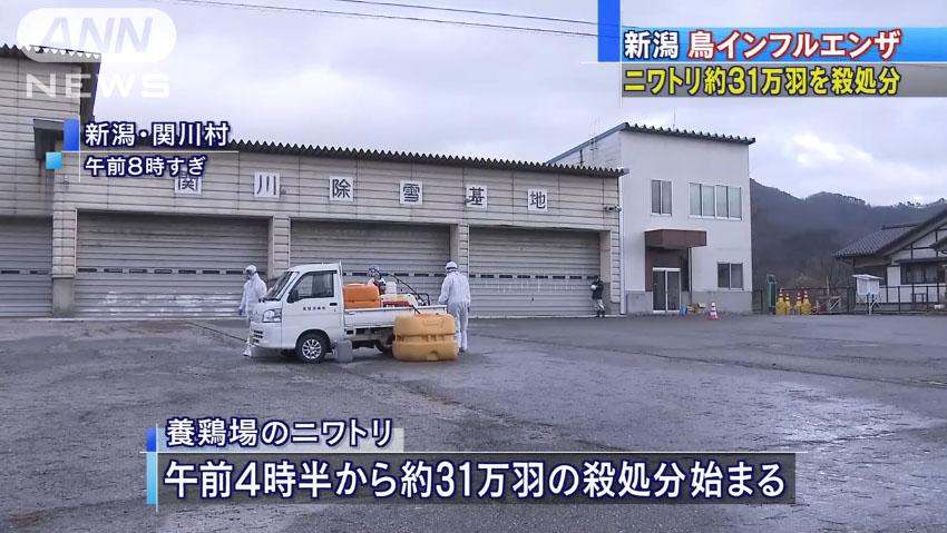 0786_Avian_influenza_Aomori_Nigata_20161129_c_01.jpg
