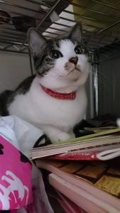 美猫、るりちゃん