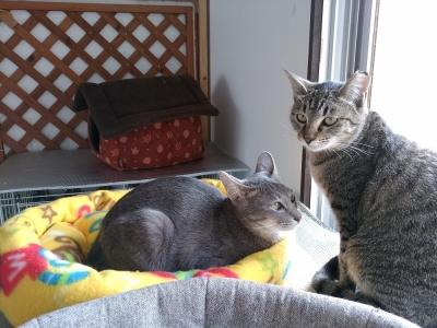 美猫、イチロー君とニコちゃん