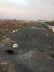 河原の猫達①