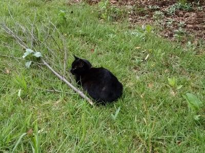 某公園の黒猫さん