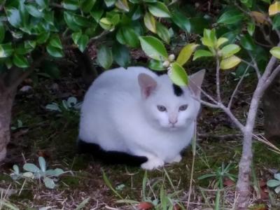 某公園の白猫さん