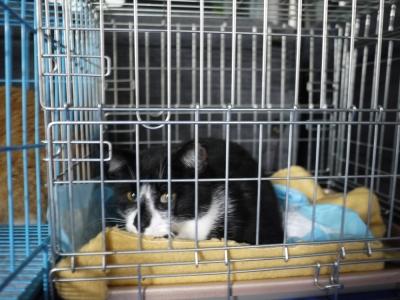 BOX竜之介 2016年11月22日 さくら猫①