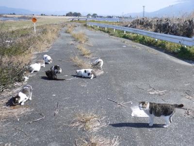 河原の猫達③