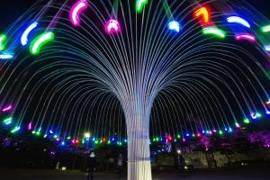 光の生る木