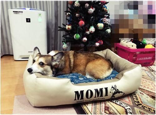 momi44.jpg
