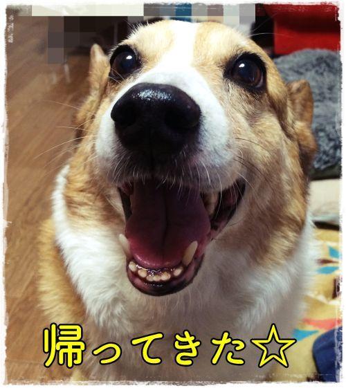 ureshiio-ji.jpg