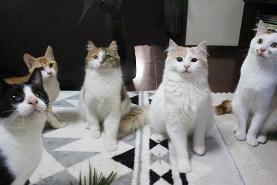 lightうちの子たちとオモチャを見つめるミケコとチロ子(中央)