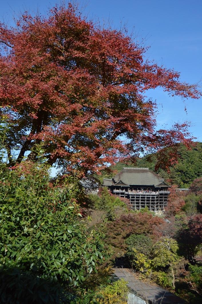 DSC_0805 161126 京都