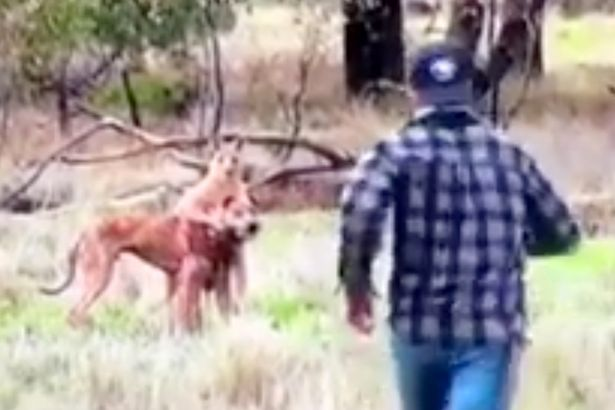 Man filmed PUNCHING kangaroo that attacked his dog and put it in a headlock