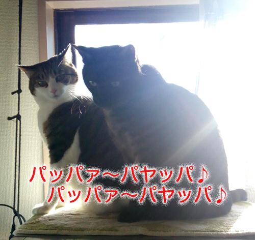 IMG_20161211_074635のコピー