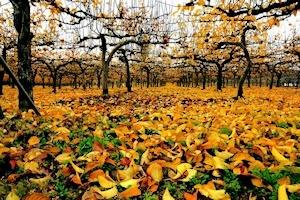 11月の時雨