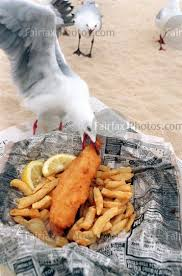 seagull fish and chip wrap