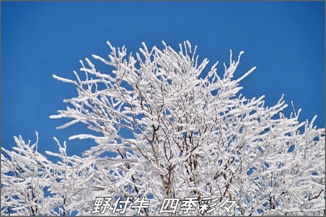 s-Canon20161107-110636-0.jpg