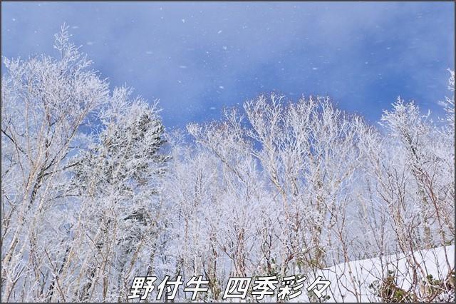 s-TG-320161112-101502-0.jpg