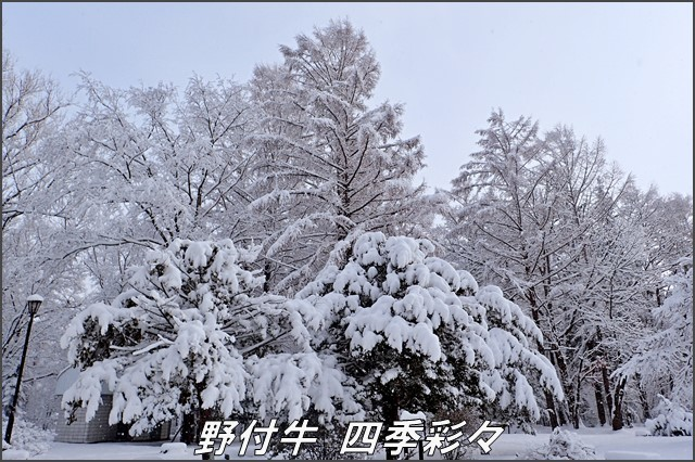 s-TG3-20161206-140757-0.jpg