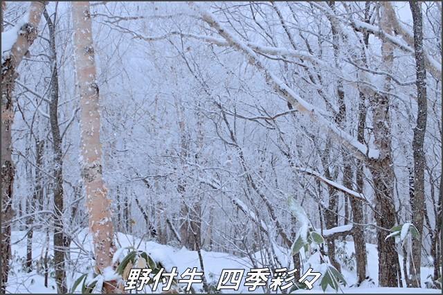 s-TG3-20161214-100608-0.jpg