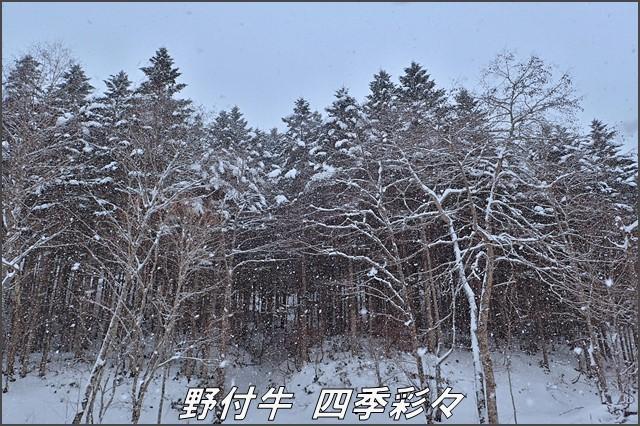 s-TG3-20161214-111541-0.jpg