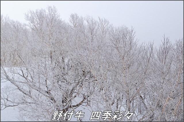 s-TG3-20170103-103149-0.jpg