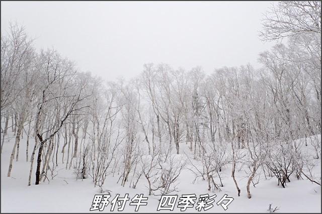 s-TG3-20170109-140009-0.jpg