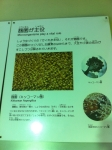 160807 (36)キッコーマン野田工場_キッコーマン菌