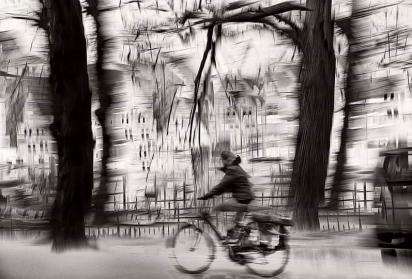 サイクリング 自転車 森林