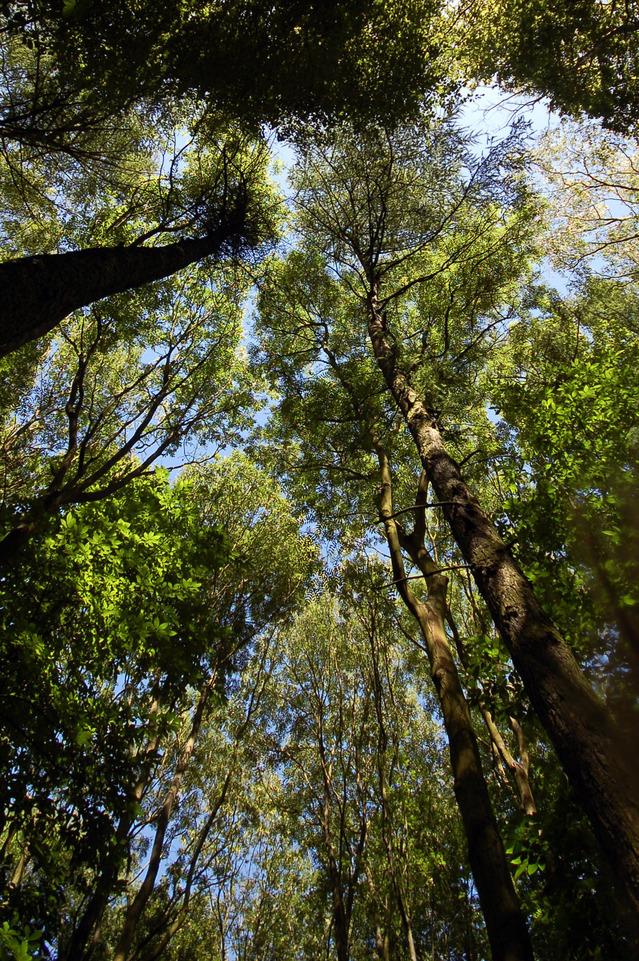 森林 樹海 静けさ