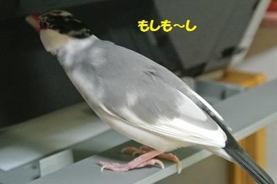 DSC_6430済