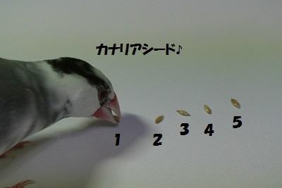 DSC_6471済