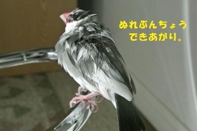 DSC_6686済